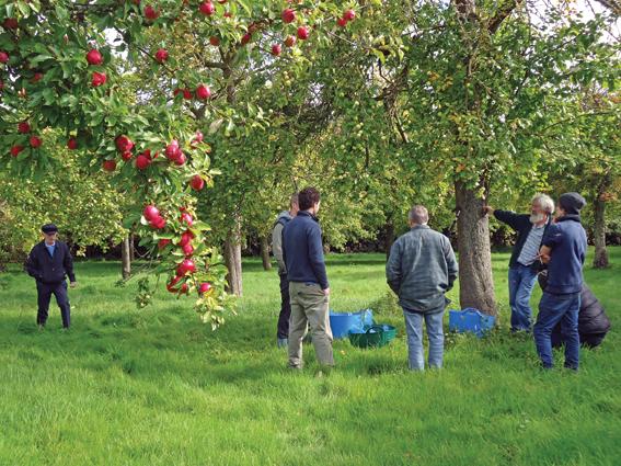 Orchardsand community
