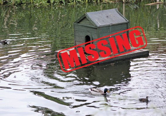 Duck house disappears