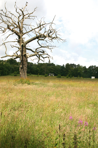 Barnt Green 'land grab' on new estate